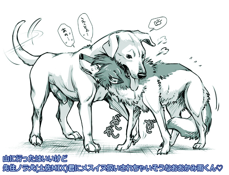 pleasent wolf and big goat big The quintessential quintuplets